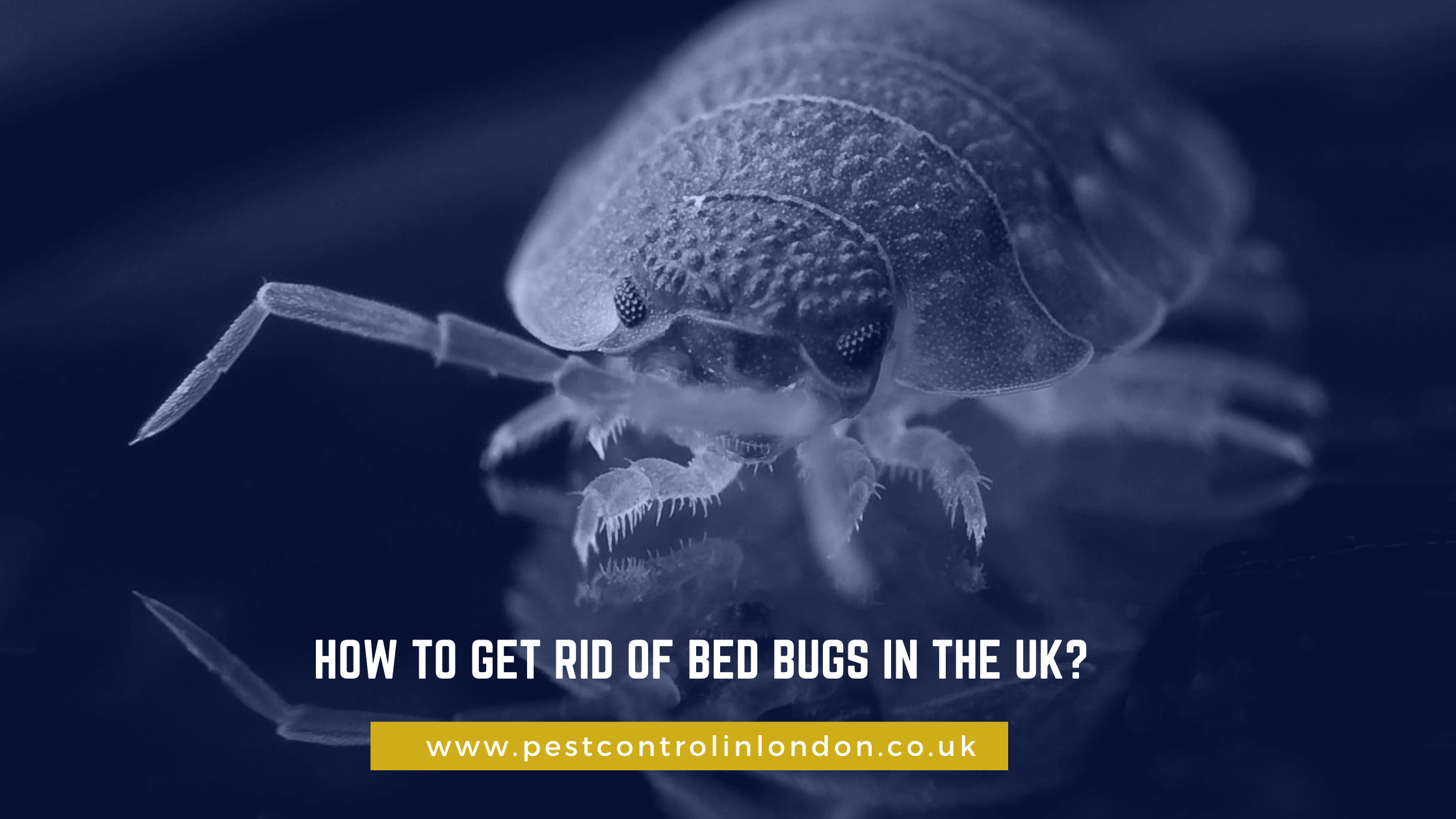 How to get rid of bed bugs in the UK_