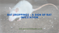Rat Droppings – A sign of rat infestation
