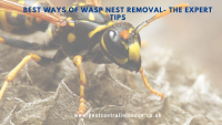 Best ways of wasp nest removal- The expert tips