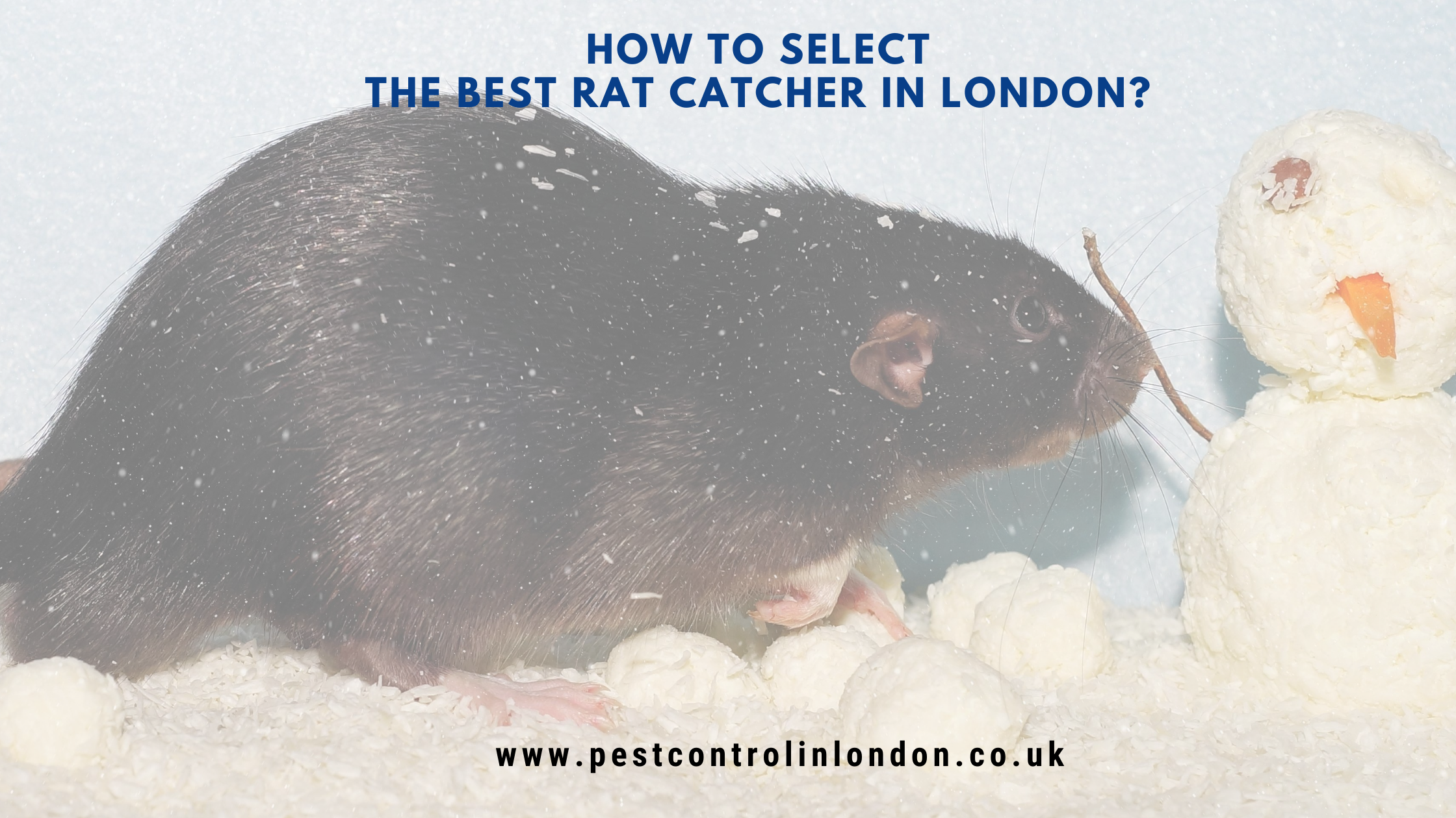 How to select the best rat catcher in London