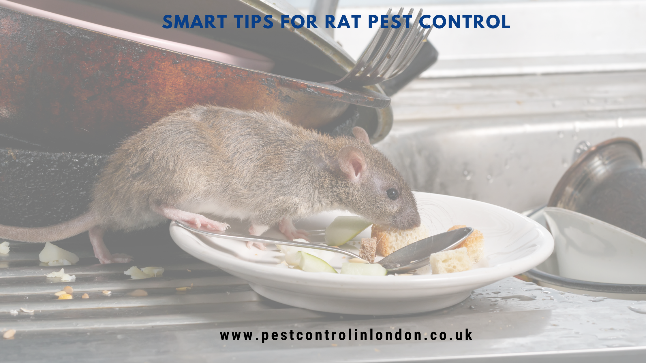 Smart tips for rat pest control
