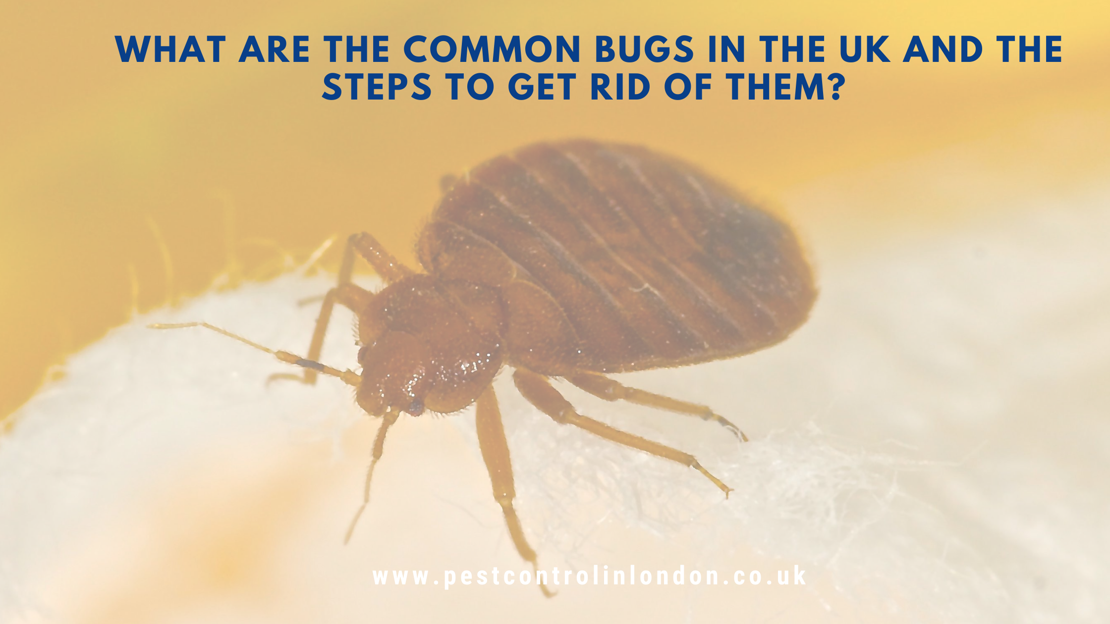 What-are-the-common-bugs-in-the-UK-and-the-steps-to-get-rid-of-them_-