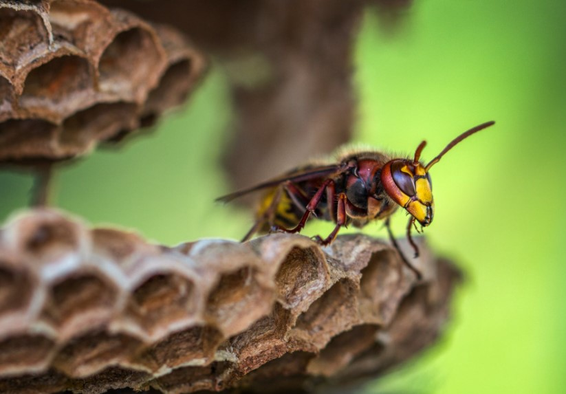 wasp control methods