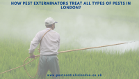 How Pest Exterminators treat all types of pests in London_