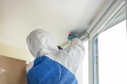 How to choose pest experts in London