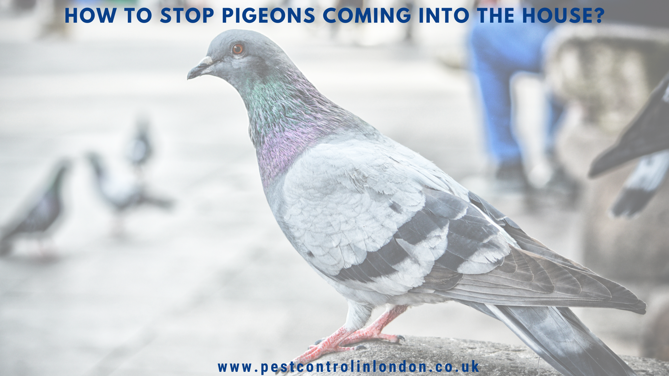 How to stop pigeons coming into the house?