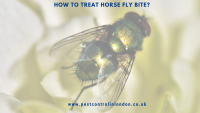 How to treat Horse Fly Bite_