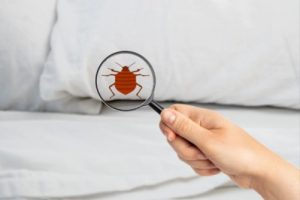 After Bed Bugs Treatment