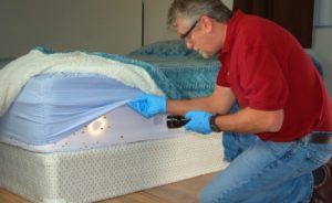 Before Bed Bugs treatment