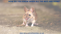 How do you know when all the mice are gone_