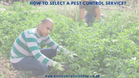 How to Select a Pest Control Service_