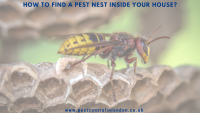 How to find a pest nest inside your house_