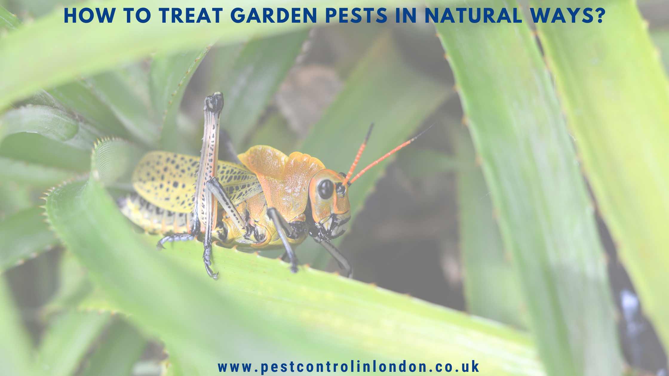 How to treat Garden Pests in Natural ways_