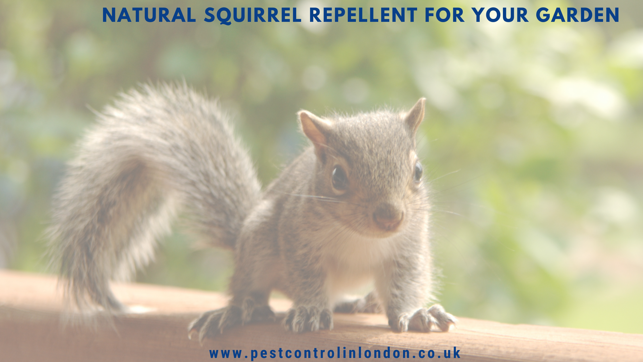 Natural squirrel repellent for your garden