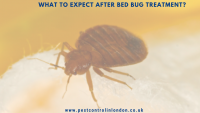 What to expect after bed bug Treatment_
