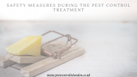Safety Measures During the pest control Treatment