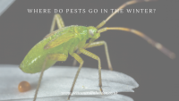 Where do Pests go in the winter_