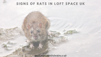 Signs of rats in Loft space UK