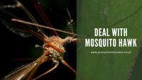 Deal with mosquito hawk
