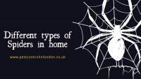 Different types of Spiders in home