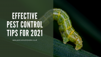 Effective Pest control Tips for 2021