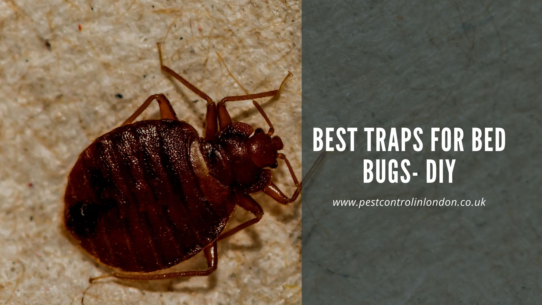 Best Traps for Bed Bugs- DIY