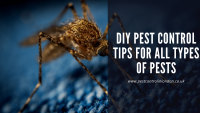 DIY pest control tips for all types of pests