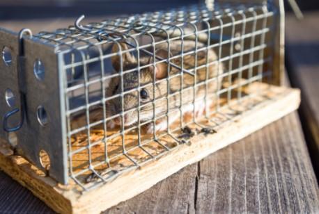 DIY rodent control