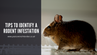 Tips to Identify a Rodent Infestation