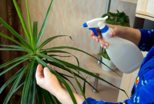 Advantages of chemical pest control treatment