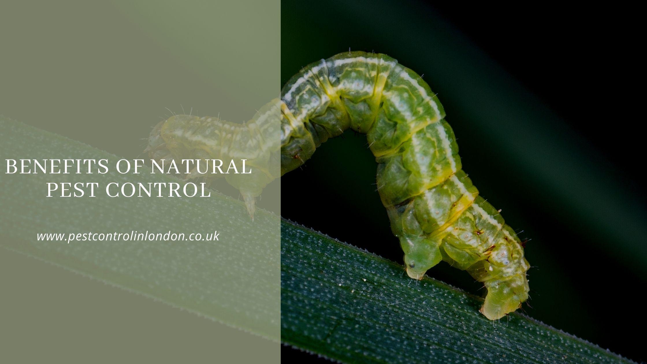 Benefits of Natural Pest control