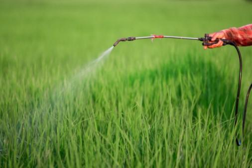 Natural pest control treatment