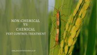 Non-chemical Vs Chemical Pest control Treatment
