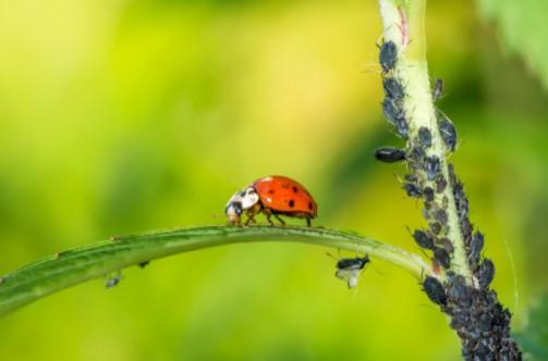 chemical pest control treatment