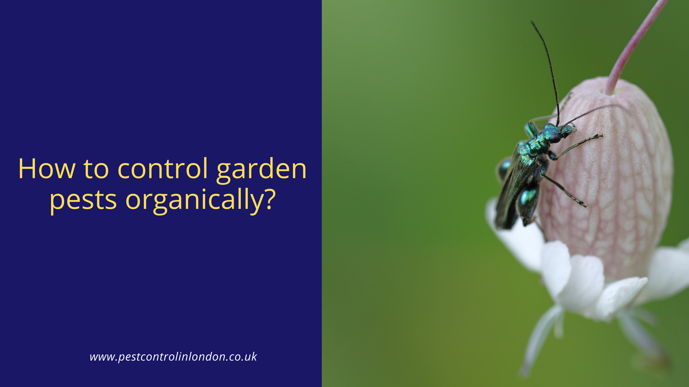 How to control garden pests organically
