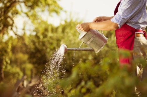 water regularly to control garden pests