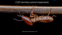 3 DIY termite control treatments