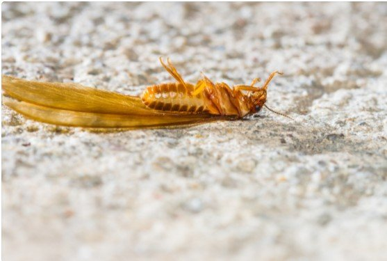 5 Signs of termites