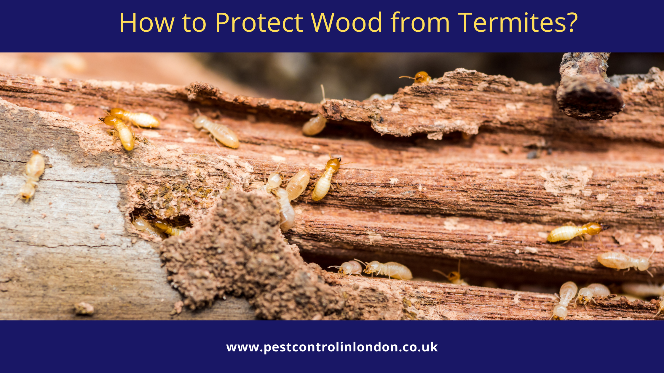 How to Protect Wood from Termites