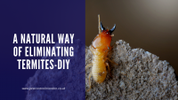 Natural way of eliminating Termites-DIY