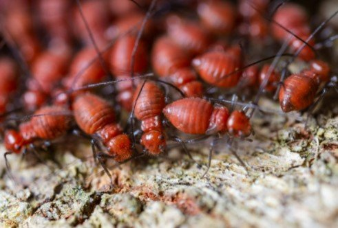 Termite control DIY