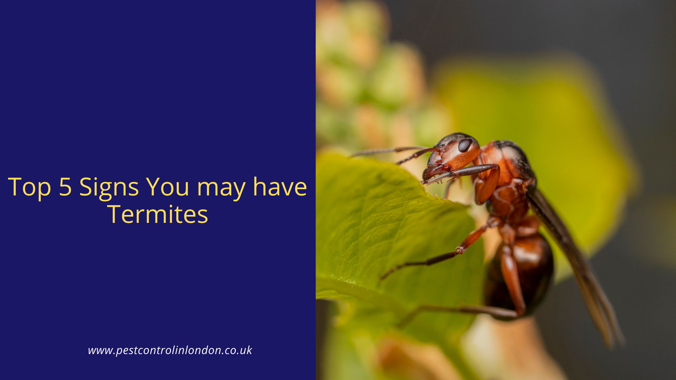 Top 5 Signs You may have Termites