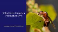 What kills termites Permanently