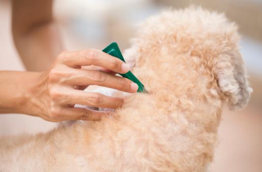 Flea treatment for pets