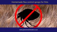 Homemade flea control sprays for Pets