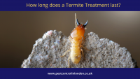 How long does a Termite Treatment last