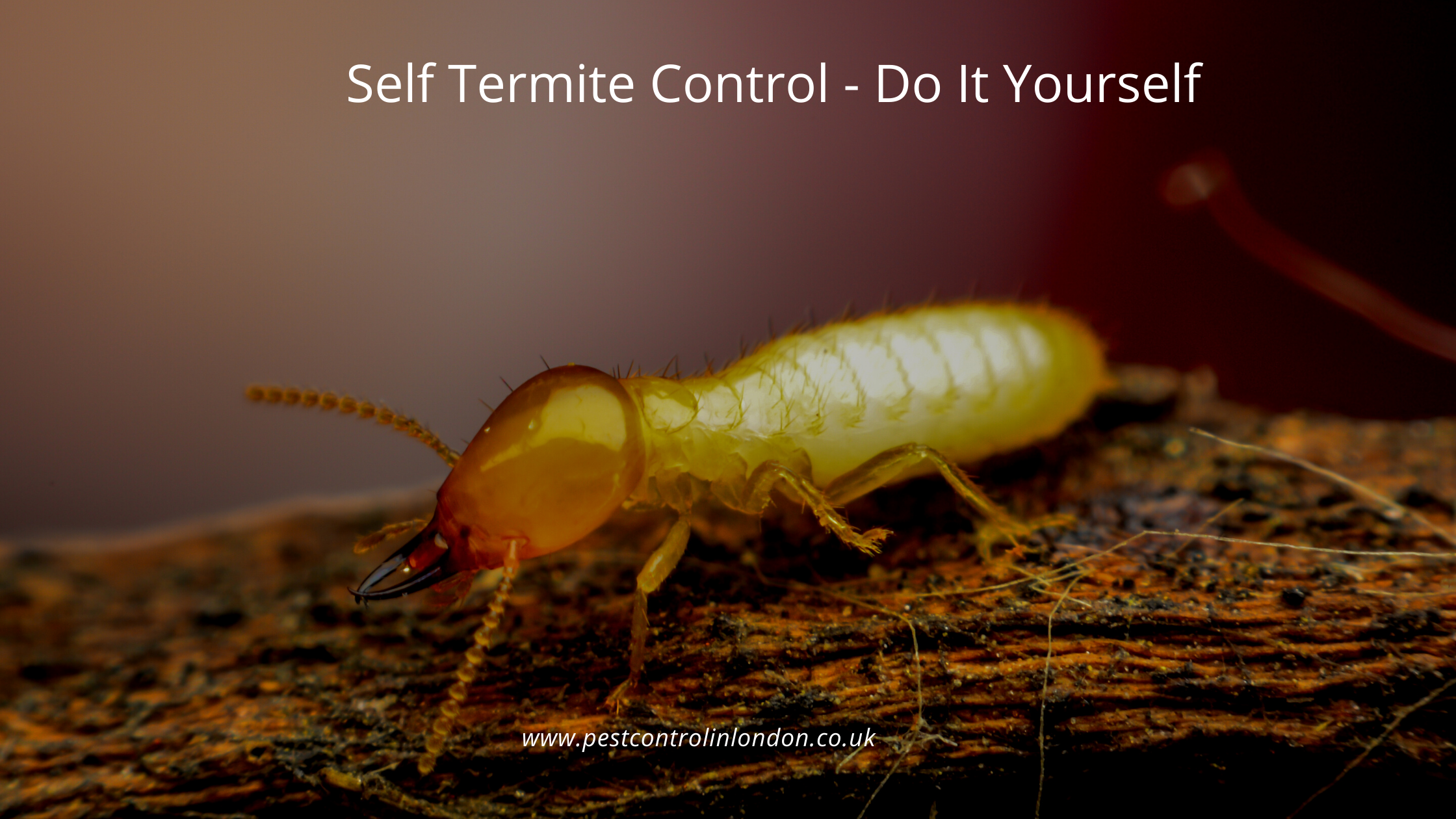 Self Termite Control- Do It Yourself