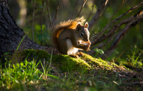 Control Measures for Squirrels