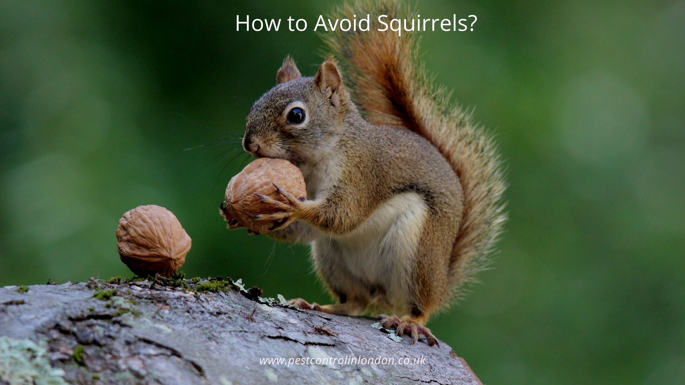 How to Avoid Squirrels