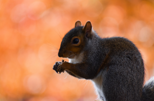 How to identify the presence of Squirrels